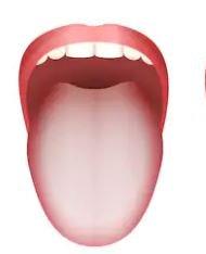 舌苔がある舌